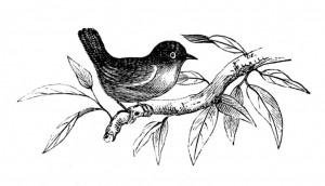 spring-bird-Vintage-Image-GraphicsFairy